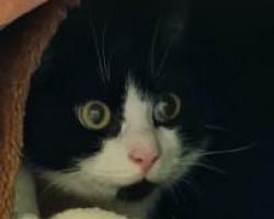 Felix (nur mit Puma)