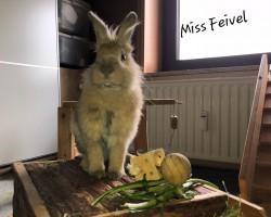 Miss Feivel