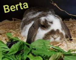 Berta (Reserviert)