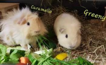Caramello und Greeny
