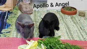 Apollo und Angel