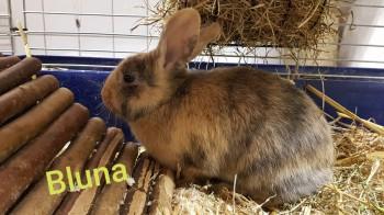 Bluna und Bonito (Reserviert)