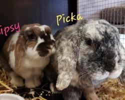 Chipsy und Picka