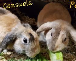 Pedro und Consuela