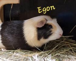 Egon (reserviert)