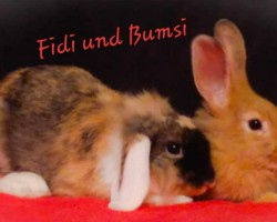 Fidi und Bumsi