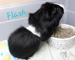 Flash (Reserviert)