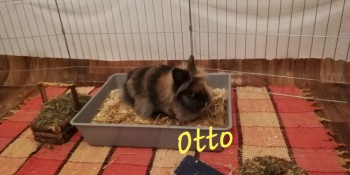 Otto  (Reserviert)