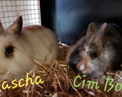 Pascha und Cim Bom