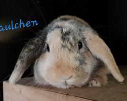 Paulchen (Reserviert)
