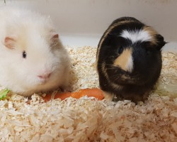 Tobi und Lenny